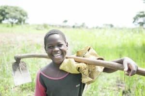 Cassava Harvesting, Gulu, Uganda 0049