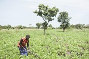 Harvest Time, Gulu, Uganda 0050